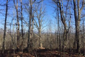 Moody Timber & Potential Development Tract - Saint Clair County AL