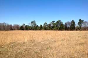 Large Acre Recreational Farmland - Chattooga County GA