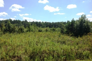 Sellers Recreational Homesite & Timber Investment - Marion County SC