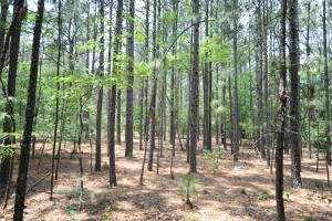 Residential Development Tract - Florence County SC