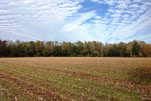 Farming & Recreational Tract - Horry County SC