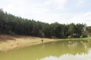 Estate Acreage with Pond - Clay County AL