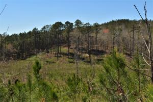 Oak Grove Road Timber Investment and Hunting Property - Fayette County AL