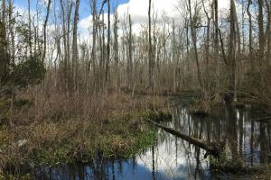 Little Salkehatchie Recreational Homesite - Bamberg County SC