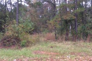+/- 221 Acre Carroll County Hunting/Timber Tract