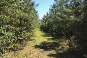 Secluded Natural Regeneration Timber Stand - East Feliciana Parish LA