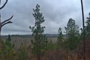 Lake Mitchell Hunting and Recreational Tract  - Chilton County AL