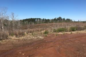 Brown Road Homesite, Hunting, and Timber Investment in Tuscaloosa, AL (11 of 13)