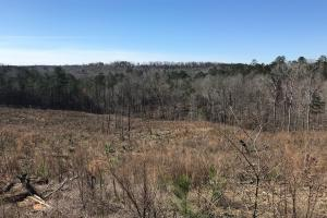 Brown Road Homesite, Hunting, and Timber Investment in Tuscaloosa, AL (6 of 13)