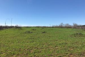 Brown Road Homesite, Hunting, and Timber Investment in Tuscaloosa, AL (2 of 13)