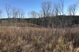 Brown Road Homesite, Hunting, and Timber Investment in Tuscaloosa, AL (4 of 13)