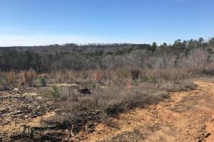 Brown Road Homesite, Hunting, and Timber Investment in Tuscaloosa, AL (13 of 13)
