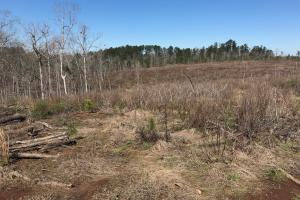 Brown Road Homesite, Hunting, and Timber Investment in Tuscaloosa, AL (8 of 13)