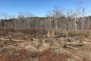 Brown Road Homesite, Hunting, and Timber Investment in Tuscaloosa, AL (5 of 13)