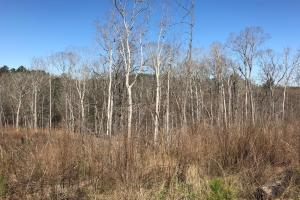 Brown Road Homesite, Hunting, and Timber Investment in Tuscaloosa, AL (3 of 13)