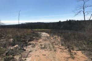 Brown Road Homesite, Hunting, and Timber Investment in Tuscaloosa, AL (12 of 13)