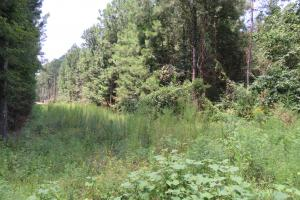 14.2 acre Rankin Co Land