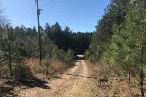 Watson Creek Hunting Tract - Lamar County AL