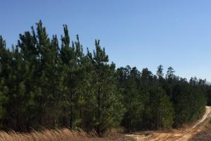 Elgin Private Timber Estate and Farm in Kershaw, SC (17 of 54)