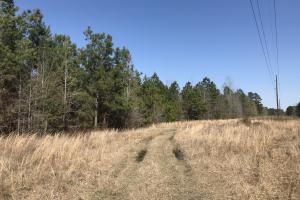 Fitch Rd Timber Land  - Williamsburg County SC