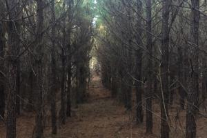 234-ACRES OF TIMBER AND RECREATIONAL PROPERTY WITH ROAD FRONTAGE in Yalobusha, MS (1 of 3)
