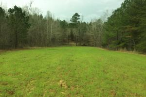 Colbert County Hunting/Timber Investment - Colbert County AL