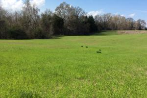 18 ac, mini horse farm,hunting and timber investment property - Hinds County MS