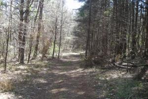 234 Acres Hunting, Recreational, Timber, Farm with Home in Floyd, GA (94 of 99)