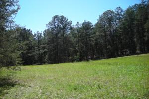 234 Acres Hunting, Recreational, Timber, Farm with Home in Floyd, GA (92 of 99)