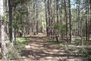 234 Acres Hunting, Recreational, Timber, Farm with Home in Floyd, GA (23 of 99)