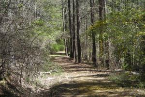 234 Acres Hunting, Recreational, Timber, Farm with Home in Floyd, GA (37 of 99)