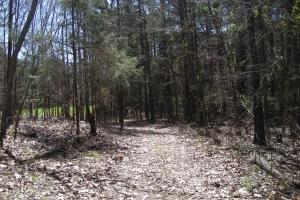 234 Acres Hunting, Recreational, Timber, Farm with Home in Floyd, GA (78 of 99)