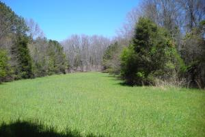 234 Acres Hunting, Recreational, Timber, Farm with Home in Floyd, GA (22 of 99)