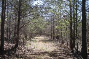 234 Acres Hunting, Recreational, Timber, Farm with Home in Floyd, GA (96 of 99)