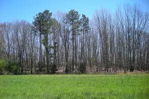 234 Acres Hunting, Recreational, Timber, Farm with Home in Floyd, GA (20 of 99)