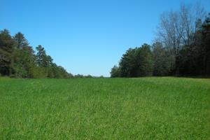 234 Acres Hunting, Recreational, Timber, Farm with Home in Floyd, GA (1 of 99)