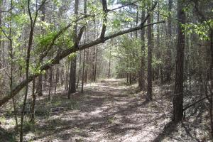 234 Acres Hunting, Recreational, Timber, Farm with Home in Floyd, GA (99 of 99)