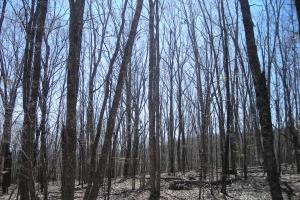 234 Acres Hunting, Recreational, Timber, Farm with Home in Floyd, GA (93 of 99)