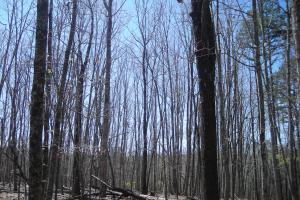 234 Acres Hunting, Recreational, Timber, Farm with Home in Floyd, GA (74 of 99)