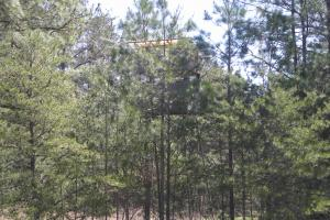 234 Acres Hunting, Recreational, Timber, Farm with Home in Floyd, GA (73 of 99)