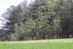 234 Acres Hunting, Recreational, Timber, Farm with Home in Floyd, GA (76 of 99)