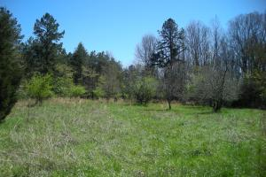 234 Acres Hunting, Recreational, Timber, Farm with Home in Floyd, GA (83 of 99)