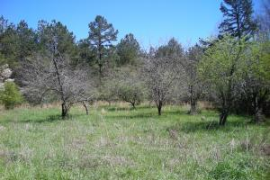 234 Acres Hunting, Recreational, Timber, Farm with Home in Floyd, GA (86 of 99)
