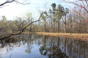 Old Santee Canal 63 Acres - Berkeley County SC