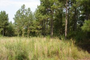 <p>land for sale in al,hunting land for sale in al,timber land for sale in al</p>
