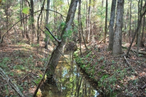 Plum Branch Large Recreational Homesite - McCormick County SC