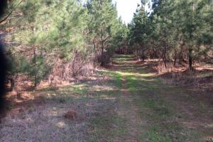 19 Acre Hunting and Timber Investment  Property  - Hinds County MS