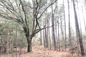 National Forest Rec Land  - Berkeley County SC