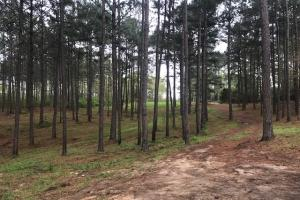 Busy Corner Road Retreat in Amite, MS (14 of 25)