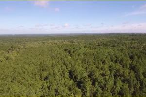 Polk County Hunting/Timberland Tract - Polk County TX